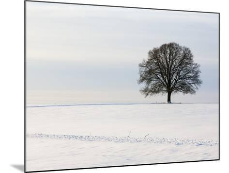 Old oak tree on a field in winter-Frank Lukasseck-Mounted Photographic Print