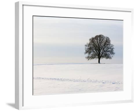 Old oak tree on a field in winter-Frank Lukasseck-Framed Art Print