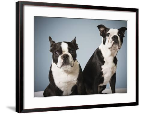 Portrait of two dogs sitting--Framed Art Print