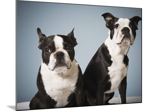 Portrait of two dogs sitting--Mounted Photographic Print