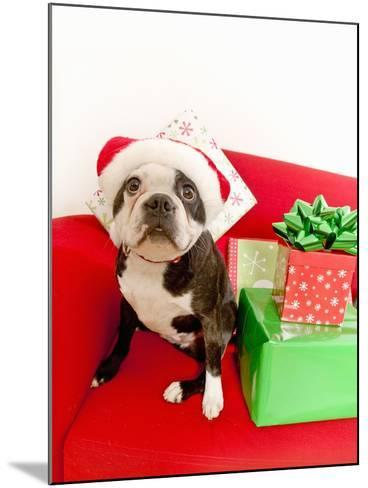 Dog wearing Santa Claus hat next to gifts--Mounted Photographic Print