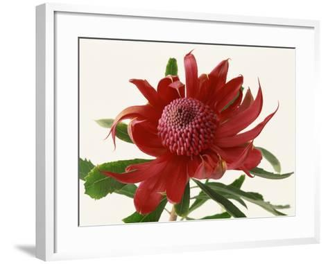 Close Up Image of Red Tropical Flower--Framed Art Print
