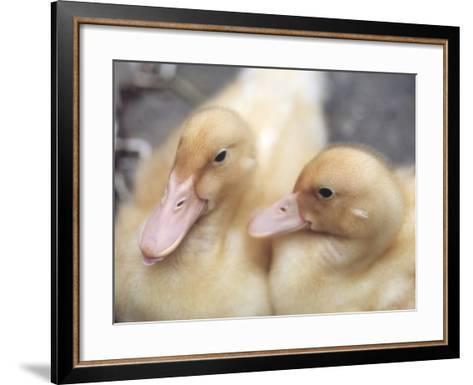 Ducklings-Aso Fujita-Framed Art Print
