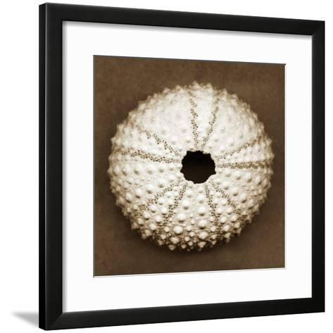 Pink Sea Urchin-John Kuss-Framed Art Print