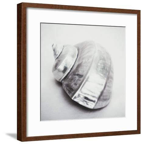 Pearl Turban Shell-John Kuss-Framed Art Print