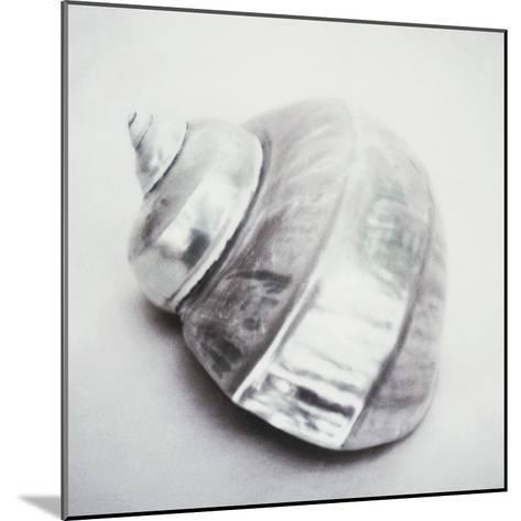 Pearl Turban Shell-John Kuss-Mounted Photographic Print