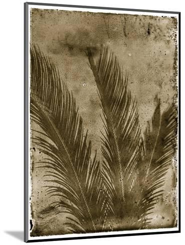 Sago Palm-John Kuss-Mounted Photographic Print