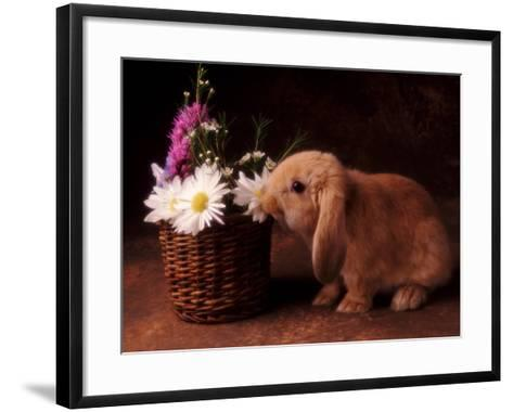 Bunny Smelling Basket of Daisies-Don Mason-Framed Art Print