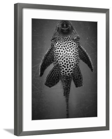 Bottom View of Catfish-Henry Horenstein-Framed Art Print