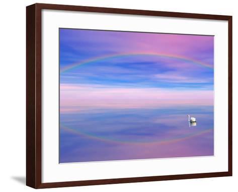 Rainbow Reflecting over Swan-Cindy Kassab-Framed Art Print
