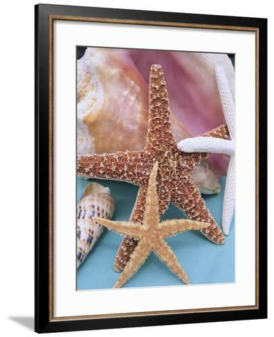 Dried Sea Stars Leaning on Shell-Robert Marien-Framed Art Print
