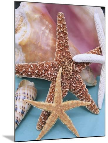 Dried Sea Stars Leaning on Shell-Robert Marien-Mounted Photographic Print