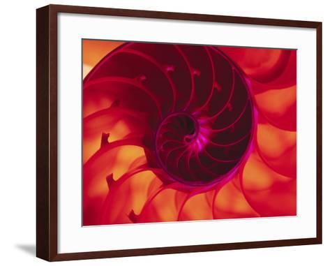 Cross Section of Chambered Nautilus Shell-Robert Marien-Framed Art Print