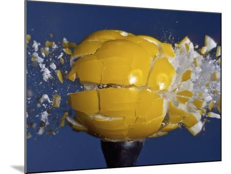 Yellow Jawbreaker Broken-Alan Sailer-Mounted Photographic Print