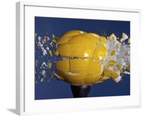 Yellow Jawbreaker Broken-Alan Sailer-Framed Art Print