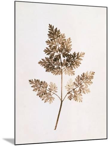 Fronds of Leaves-William Henry Fox Talbot-Mounted Photographic Print