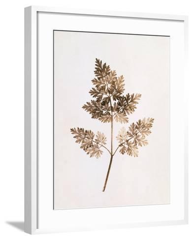 Fronds of Leaves-William Henry Fox Talbot-Framed Art Print