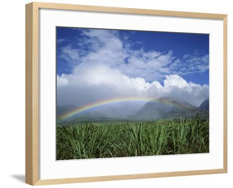 Rainbow Above Sugar Cane Field on Maui-James Randklev-Framed Art Print