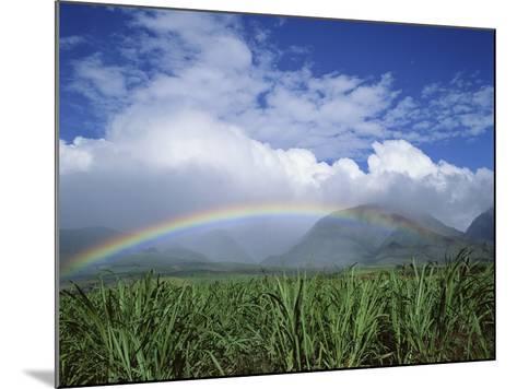 Rainbow Above Sugar Cane Field on Maui-James Randklev-Mounted Photographic Print