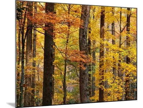 Hardwood Forest in Autumn-James Randklev-Mounted Photographic Print