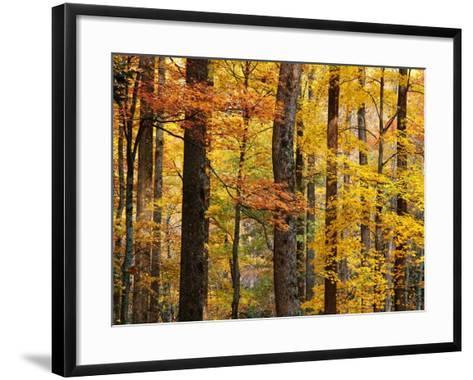 Hardwood Forest in Autumn-James Randklev-Framed Art Print