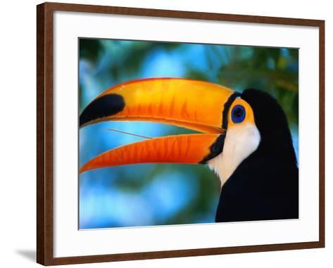 Toco Toucan-Theo Allofs-Framed Art Print