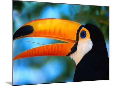 Toco Toucan-Theo Allofs-Mounted Photographic Print