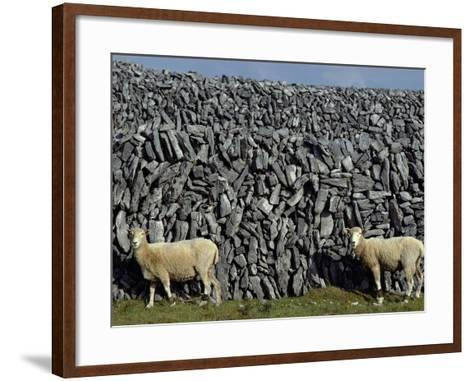 Hobbled Sheep by a Dry Stone Wall-Alen MacWeeney-Framed Art Print