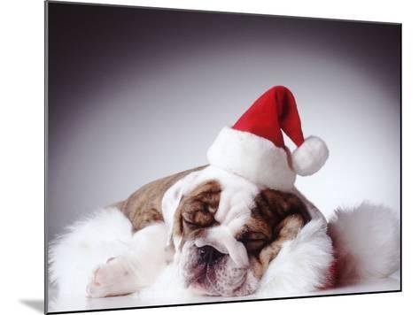 Bulldog Wearing Santa Hat-Larry Williams-Mounted Photographic Print