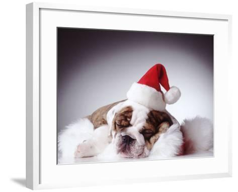 Bulldog Wearing Santa Hat-Larry Williams-Framed Art Print