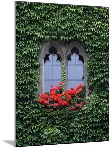 Window of Regensburg Town Hall-Adam Woolfitt-Mounted Photographic Print