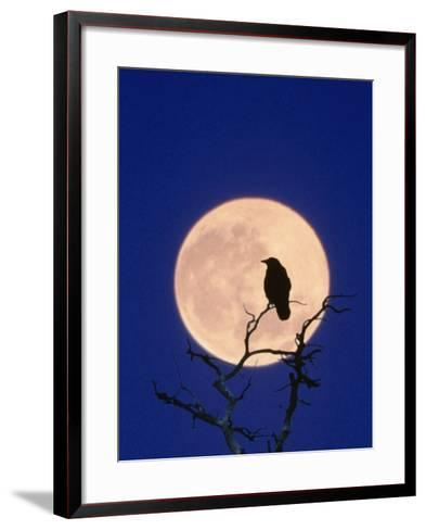 Full Moon over Raven in Tree-Aaron Horowitz-Framed Art Print