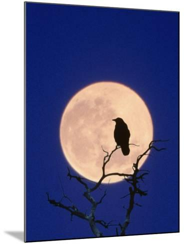 Full Moon over Raven in Tree-Aaron Horowitz-Mounted Photographic Print
