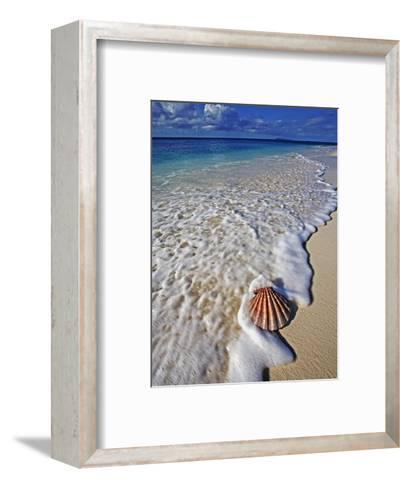 Scallop Shell in the Surf-Martin Harvey-Framed Art Print