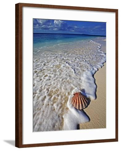 Scallop Shell in the Surf-Martin Harvey-Framed Art Print