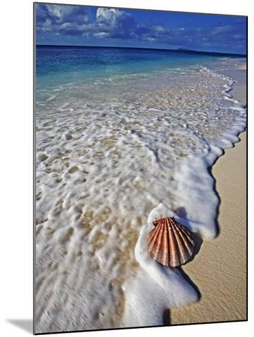 Scallop Shell in the Surf-Martin Harvey-Mounted Photographic Print
