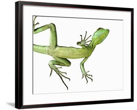 Double-Crested Basilisk-Martin Harvey-Framed Art Print