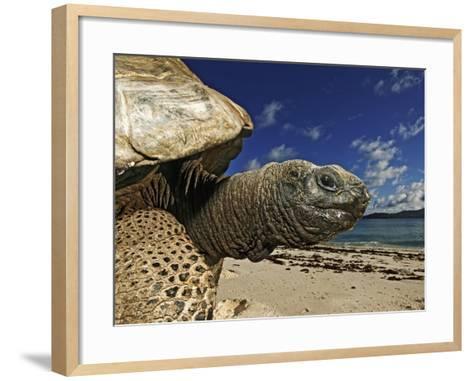 Giant Tortoise on the Beach-Martin Harvey-Framed Art Print
