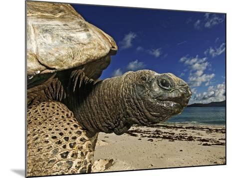 Giant Tortoise on the Beach-Martin Harvey-Mounted Photographic Print
