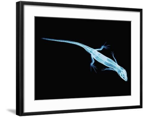X-Ray of Lizard-Robert Llewellyn-Framed Art Print