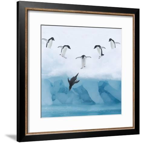 Penguins Jumping into Water-Tim Davis-Framed Art Print