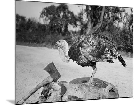 Side profile of a turkey and axe on a tree stump--Mounted Photographic Print