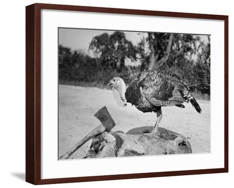 Side profile of a turkey and axe on a tree stump--Framed Art Print