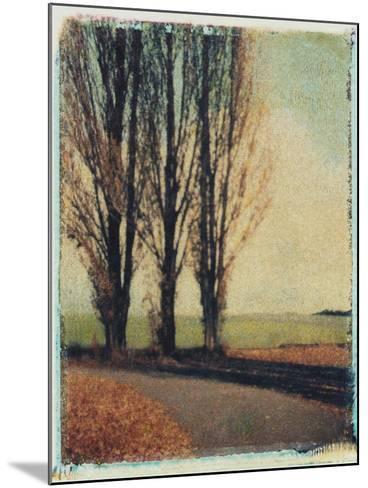 3 Poplars Late Fall-Jennifer Kennard-Mounted Photographic Print