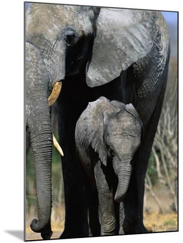 Elephant Mother and Calf-Theo Allofs-Mounted Photographic Print