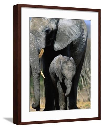 Elephant Mother and Calf-Theo Allofs-Framed Art Print