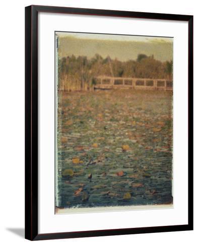Foster Island Lily Pads-Jennifer Kennard-Framed Art Print