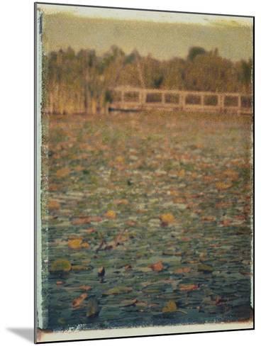 Foster Island Lily Pads-Jennifer Kennard-Mounted Photographic Print