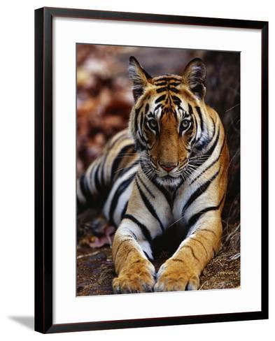 Young Female Tiger Lying on Rock-Theo Allofs-Framed Art Print
