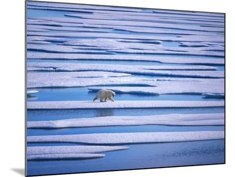 Polar Bear on Pack Ice-Hans Strand-Mounted Photographic Print